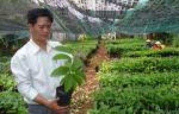 Làm giấy phép kinh doanh giống cây lâm nghiệp